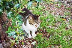 Today's Cat@2016-04-16 (masatsu) Tags: cat pentax catspotting mx1 thebiggestgroupwithonlycats