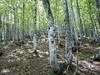 Bosque hacia El Arco... (Alf Ba) Tags: spain asturias bosque monte elarco p340