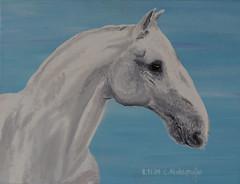 Lippizaner (kunstgrafik) Tags: kunst blau weiss pferd nase tier hengst lippizaner luethi zeitgenssisch abdelghafar lgemldeleinwand
