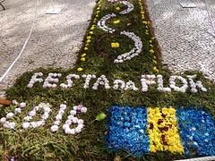 Festa da Flor (moacirdsp) Tags: portugal flor da festa madeira funchal 2016