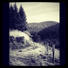 #trees#road#mountain#ardeche#ardche#france#cybershot#sony#nb#bw#blackandwhite#b&w (danielrieu) Tags: road b trees blackandwhite bw mountain france sony cybershot nb ardeche ard uploaded:by=flickstagram instagram:photo=230043953625474768186911192