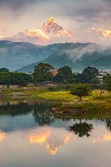 Sunrise at Pokhara (Roantrum) Tags: nepal sunrise pokhara himalayas fishtail machapuchare mf16 roantrum