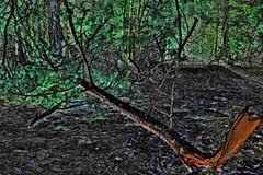 fallen tree - another world (camerito) Tags: tree flickr forrest surreal fallen inverted baum j4 unwirklich nonegative umgefallen invertiert nikon1 camerito keinnegativ