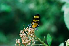 (luprmelo) Tags: flores flower verde luz cores flor preto amarelo ibirapuera livre voar