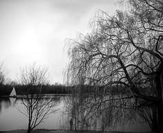 Trauerweide am Elfrather See (Ke Bra) Tags: tree germany deutschland see nrw krefeld sw baum niederrhein elfrathersee trauerweide schwarzweis