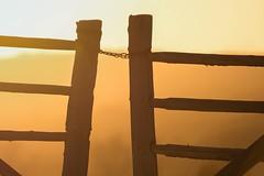 Chains (Tracey Rennie) Tags: sunset fence gate alberta goldenhour cochrane