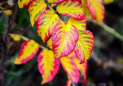 Colores en Volendam (Marisol Torremocha Lpez) Tags: naturaleza europa colores holanda volendam