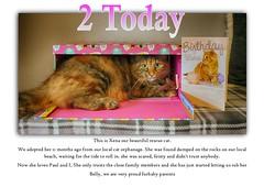Happy Birthday Xena (Denni1980) Tags: birthday rescue girl cat tabby kitty xena
