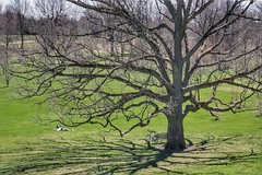 A spring Saturday in the park. Perfect in the sun! (beyondhue) Tags: ottawa arboretum spring season sunny warm sun person rest recreation bicycle saturday relax beyondhue park green landscape shadow bare tree relaxation grass oak
