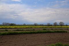 IMG_1688 (D.Phil) Tags: natur feld himmel landschaft raps kaiserstuhl weinberge