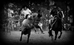 Klinsmann Moreira (Eduardo Amorim) Tags: brazil horses horse southamerica brasil criollo caballo cheval caballos cavalos pferde cavalli cavallo cavalo gauchos pferd riograndedosul pampa hest hevonen campanha brsil chevaux gaucho  amricadosul fronteira hst gacho  amriquedusud  gachos  sudamrica suramrica amricadelsur  sdamerika crioulo caballoscriollos criollos jineteada   americadelsud gineteada dompedrito  crioulos cavalocrioulo americameridionale caballocriollo eduardoamorim cavaloscrioulos