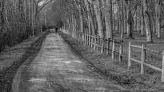 A sunday morning (christian.grelard) Tags: morning blackandwhite bw monochrome bike canon eos noiretblanc sunday nb promenade arbre dimanche chemin vélo matin indreetloire 700d canonfrance