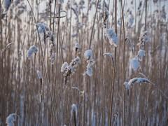 Lumihuppuja (TaleOfJoy) Tags: winter snow finland helsinki lumi talvi vuosaari kaisla