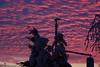 Nature's TV: Winter Morning (Cobra_11) Tags: morning winter light sky sun tree sunrise canon licht himmel sonne sonnenaufgang canoneos morgen baum ef50mmf18ii ef50mm118ii canoneos450d digitalrebelxsi
