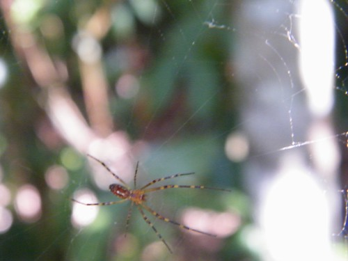 Spider Unfocused