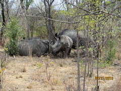 Zimbabwe (205) (Absolute Africa 17/09/2015 Overlanding Tour) Tags: africa2015