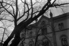 2016-02-09-0003 (Bi&Me) Tags: bw tree architecture baum 50iso minoltaxd7 lerchenfelderstrase minolta35mmf18 polypanf35mm