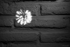 iluminacion abstracta (KaelF fotografias) Tags: retrato modelo abstracto curso artistico fotoarte cursofotografia