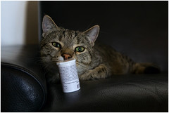 Medication required (FocusPocus Photography) Tags: pet animal cat chat gato katze haustier kater tier sethi