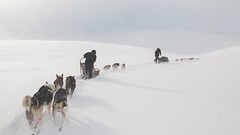 Lapland-0956 (EB_Creation) Tags: lapland sweden sledge dog mushing ruby5 snow holidays vacation fantastic