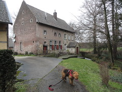 2016-0098 (schuttermajoor) Tags: nederland hond che eijsden 2016 airedaleterrier voer ommetjenederland