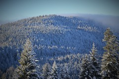 Snowy fir hill (yanoche) Tags: winter white snow montagne switzerland suisse hiver jura neige sapin vaud raquettes orblanc