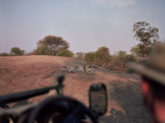 Leopard (chillbay) Tags: africa mamiya southafrica leopard mamiya645 krugernationalpark kruger tandatula
