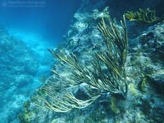 Edge of the Reef (right2roam) Tags: island scuba diving snorkeling curacao caribbean netherlandsantilles softcoral dutchcaribbean right2roam