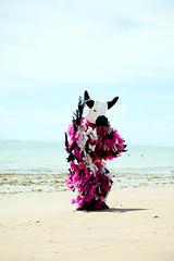 Carnaval 2016 (Gustavo Penteado) Tags: praia la carnaval ursa laursa gustavopenteado carnavaldepernambuco