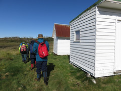 Linesmans Huts (Environment + Heritage NSW) Tags: weed volunteers volunteer kosciuszko kosciuszkonationalpark orangehawkweed noxiousweed volunteerprogram weedcontrol orangehawkweedcontrolprogram weedprogram