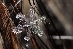 IMG_8548 (nitinpatel2) Tags: snowflakes patel nitin