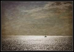 ...infinity... (kurtwolf303) Tags: seagull möwe segelboot boat sea ocean meer water wasser horizon horizont olympusem1 omd microfourthirds micro43 teneriffa tenerife spain spanien islascanarias kanaren canaryislands unlimitedphotos kurtwolf303 systemcamera españa europe 250v10f seascape 500v20f texture textur ebenen topf25 topf50 greatphotographers layers topf75 1000v40f 1500v60f topf100 7000views topf150 himmel sky 8000views 9000views fotorahmen frame outdoor 10000views 11000views mft