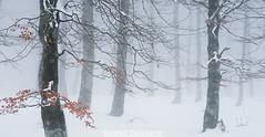Kolore pintzeladak (izubiaurre) Tags: schnee winter panorama espaa white snow color colour blanco fog landscape pano nieve atmosphere paisaje colores invierno es atmosfera niebla forests euskadi elurra bosques panormica atmsfera panoramika salvatierra zuria koloreak paisaiak negua basoak behelainoa