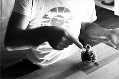 Le Pigeon de la Fentre. IMG100718_004__S.D/S.I.P_FR_JPG Compression. (Sbastien Duhamel) Tags: copyright news paris france bird nature canon french europa europe european photographer pigeon newmedia eu agency canon5d press information fr francia oiseau prensa fra fotografo photojournalist informacion photographe presse naturesfinest addictedtoflickr fotoperiodista flickrsbest frenchphotographer fotoreportero photojournaliste golddragon ultimateshot flickrdiamond bancodeimagenes flickriver goldstaraward birdsproject ornithologue thebestofday rubyphotographer flickrlovers photographefranais mdiapart flickroom pigeondeparis flickrhivemindgroup reporterphoto fotografofrancs oiseaudeparis footagestock pigeonofparis banquedimages journalistephoto projetoiseaux labiodiversitdumilieunaturel birdofparis