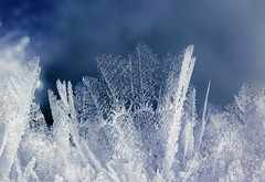 Fragile (sosivov) Tags: blue winter white snow macro ice crystals sweden