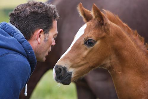 Horses Insight  (1)