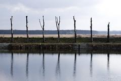 I I Y Y I I i (wirsindfrei) Tags: reflection nature landscape polska symmetry polen kanal oder czerwony subice kanalczerwony