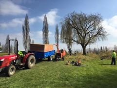 "One of the willow reductions today at Leamington golf course for Stump removal services #wardenstreecare <a style=""margin-left:10px; font-size:0.8em;"" href=""http://www.flickr.com/photos/137723818@N08/25863348255/"" target=""_blank"">@flickr</a>"