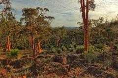 the aussie bush, (SUSETOZER) Tags: landscape gumtrees blackboys exposureblending aussiebush