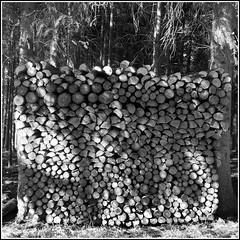 Brennholz (HORB-52) Tags: holz schwarzwald blackforest badenwürttemberg forêtnoire berndsontheimer
