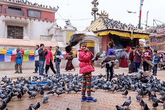 Nirmala amidst a flock of pigeons at the Boudhanath temple in Kathmandu. (Handicap International UK) Tags: nepal handicapinternational ngo prosthesis physiotherapy rehabilitation nepalearthquake