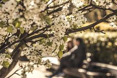 Abril  (Julieta Portel) Tags: parque couple pareja flor blossoms helios peral helios44m258