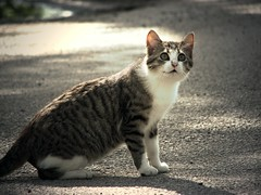 I See (ClvvssyPhotography) Tags: outdoors park coleman texas brothers face furry animals looking lines clvvssyphotography street