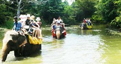 elephan-safari-in-sri-lanka (Mobile/WhatsApp:00919495509009) Tags: