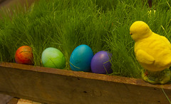 Easter Eggs (rumimume) Tags: red holiday ontario canada green grass yellow canon easter photo still purple sunday sigma niagara eggs coloured picoftheday 2016 550d t2i rumimume