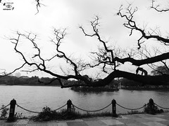 Scratches on the canvas (NIRA BANERJEE) Tags: trees sky white lake black west nature water monochrome landscape asia scenary colored non solitary kolkata bengal secluded nonhuman