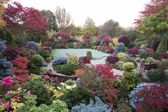 The joy of autumn colours on a frosty morning (Four Seasons Garden) Tags: uk morning flowers blue autumn red england colour green english leaves yellow garden four japanese early maple frost seasons award foliage national begonia deciduous winning walsall 2015 acers