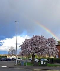 A Turd Polish'd (Bricheno) Tags: tree cars bench scotland rainbow blossom escocia szkocja renfrew sportscentre schottland scozia cosse  esccia   bricheno newmainsroad scoia