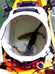 Reporte Pesca Kayak4