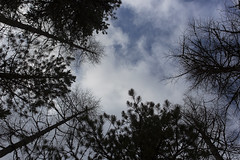 Val Roseg (wolfman1908) Tags: wild nature wildlife natura bosco avifauna naturalmente roseg